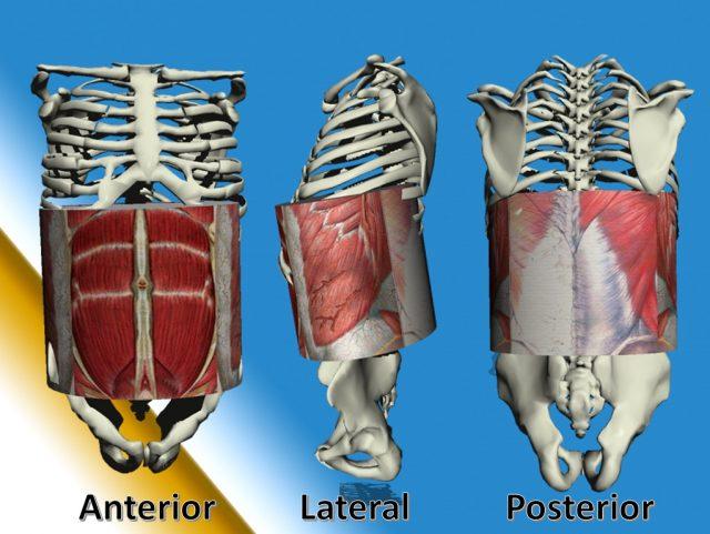 limites de la pared abdominal