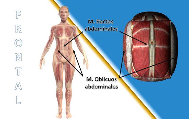 limite anterior de la pared abdominal