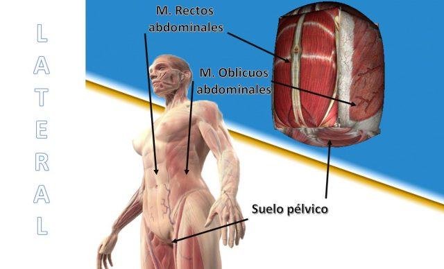 laterales derecha e izquierda pared abdominal